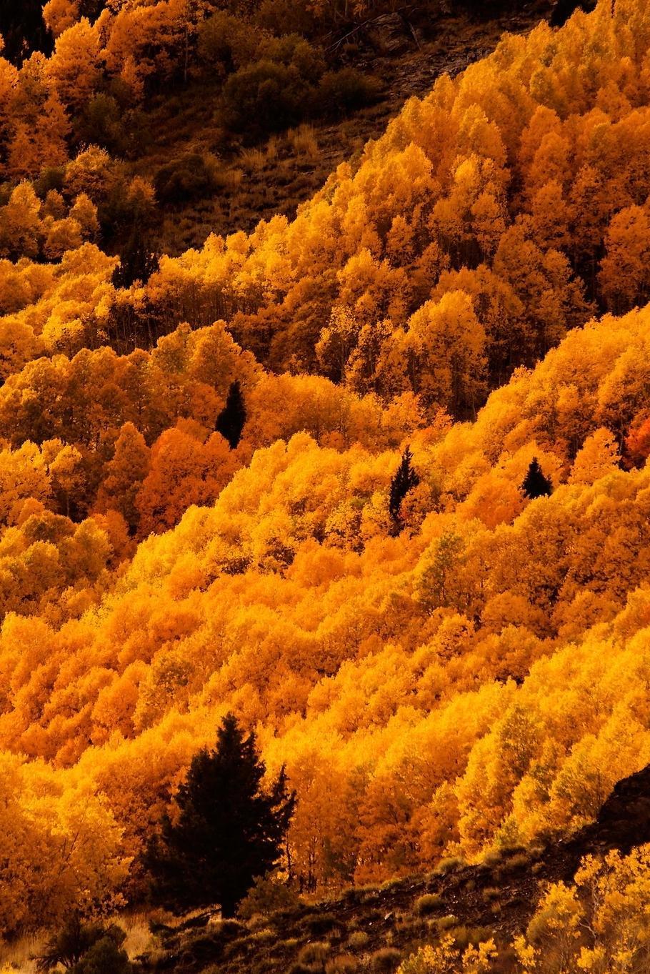 orange forest trees