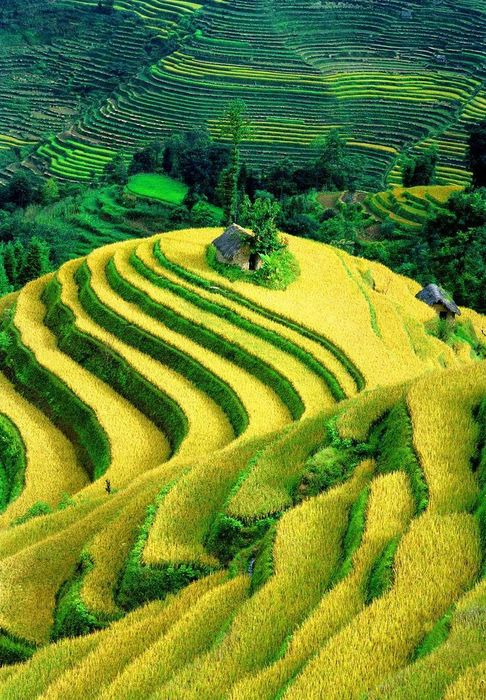rice terraces in mu cang chai district vietnam