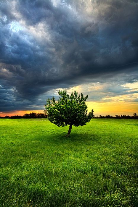 tree alone grass grey clouds nature