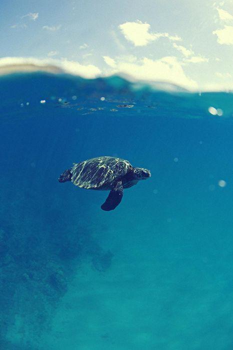 ocean turtle water