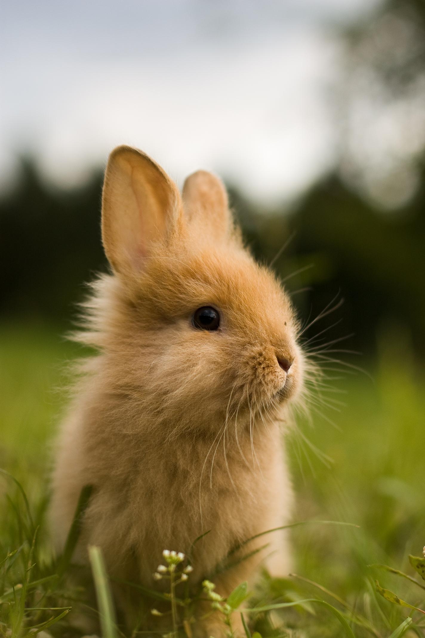rabbit bunny mammal cute ear animal rodent pet fur