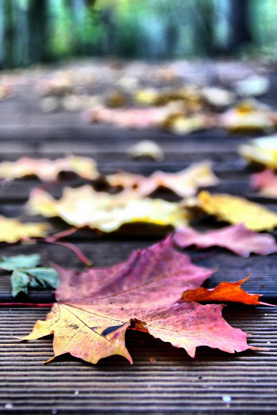 colorful leaves macro photo wallpaper
