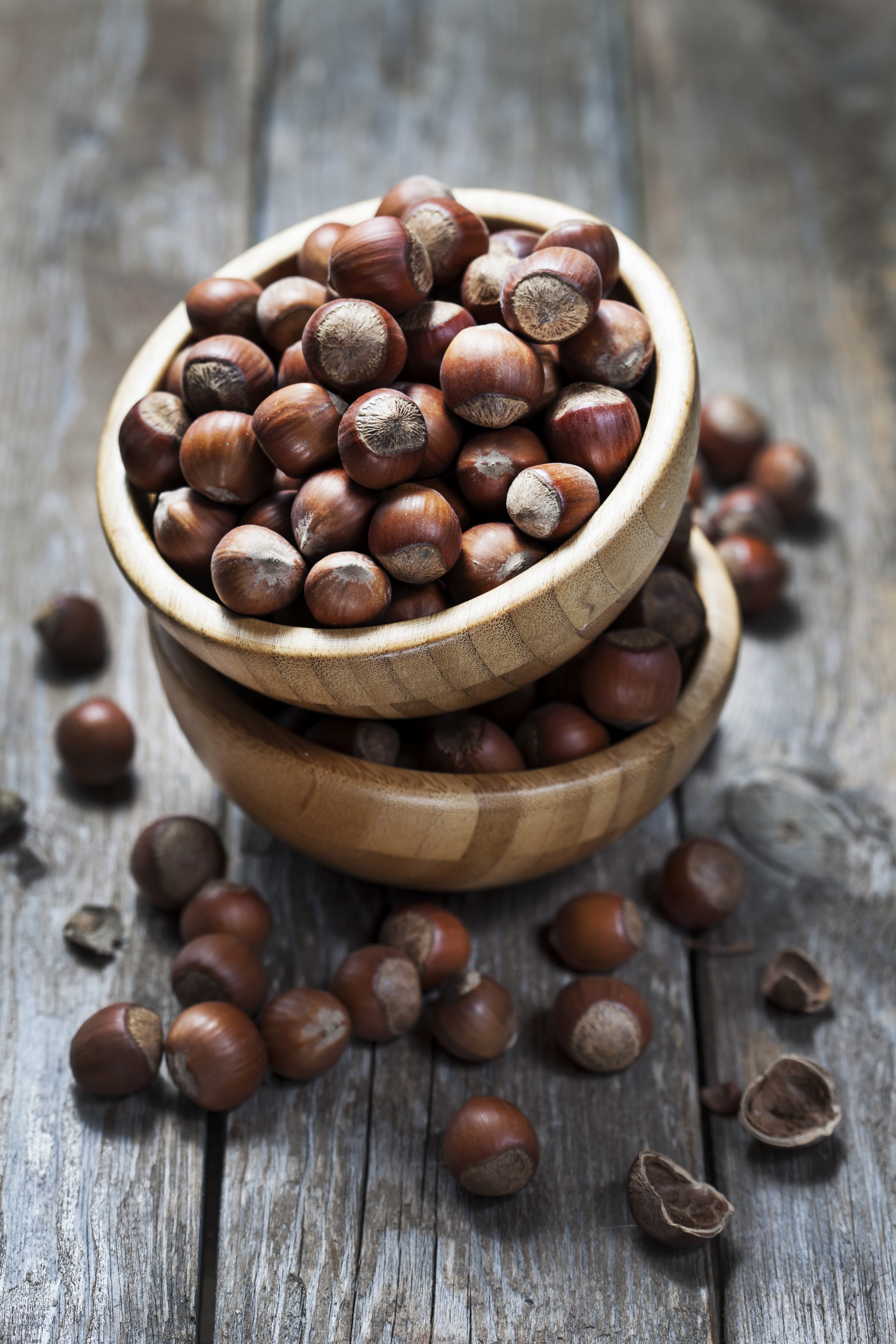 hazelnut seed brown bean food photo nut beans roasted