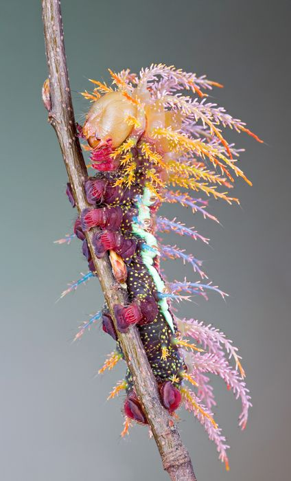 centipede colorful branch nature animal