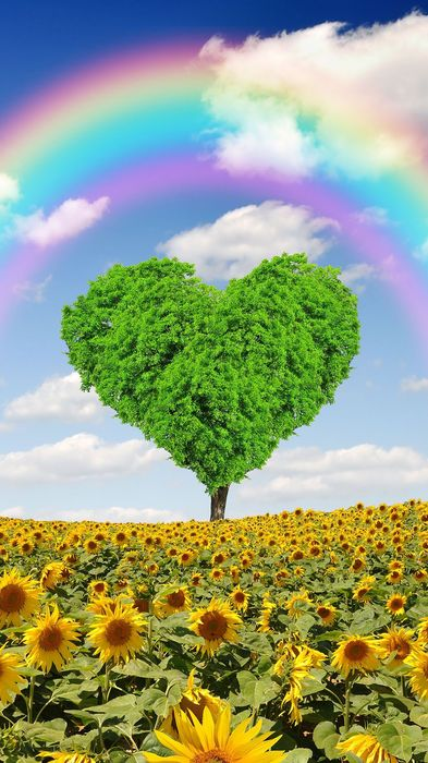 heart tree rainbow clouds sunflower