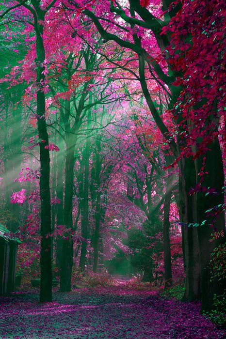 pink forest daily light