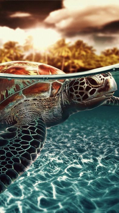 sea turtle holiday animal underwater
