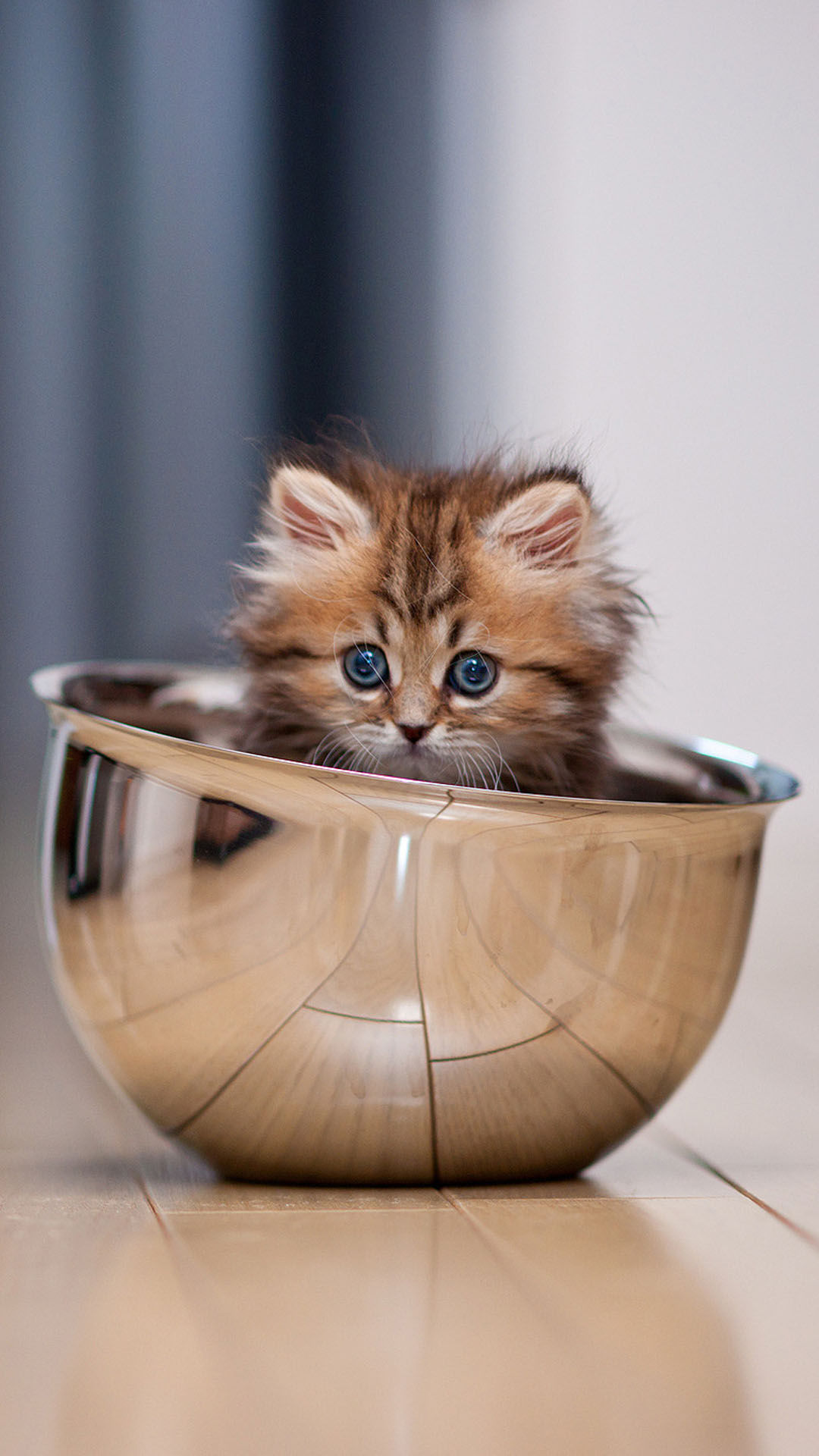 cute kitten in a bowl