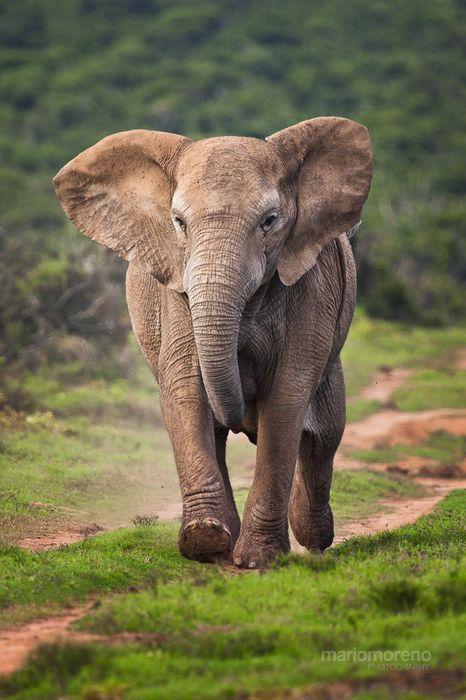 elephant grass run
