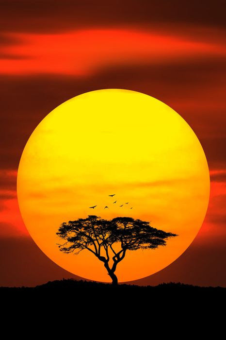 savannah tree sun birds red sky