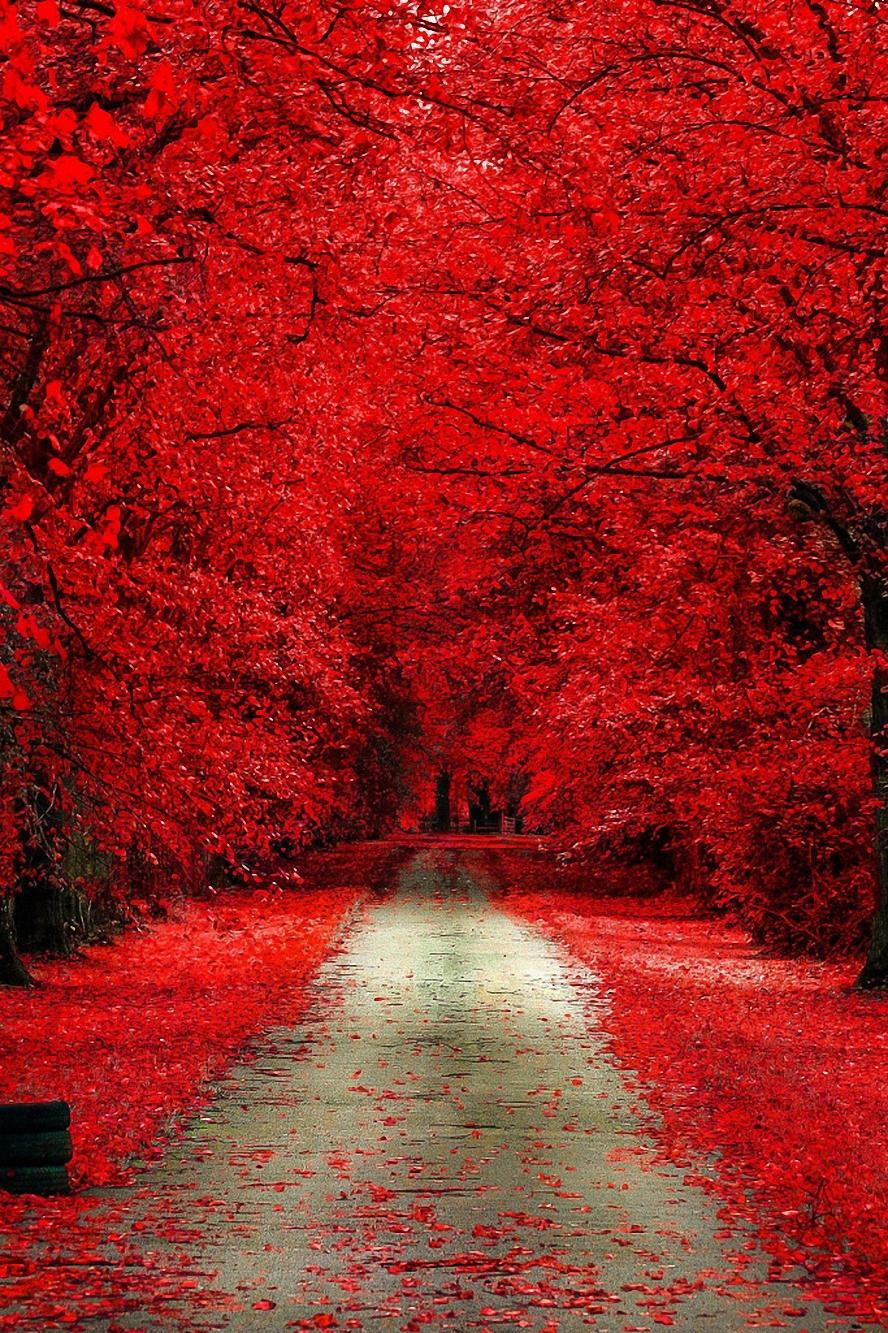 red forest park trees road