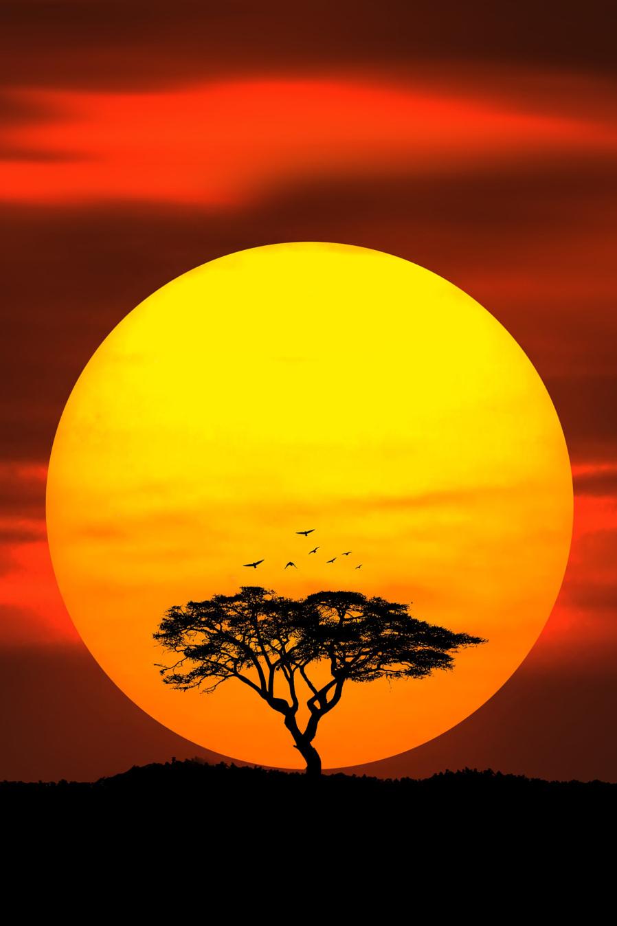 savannah tree sun birds red sky