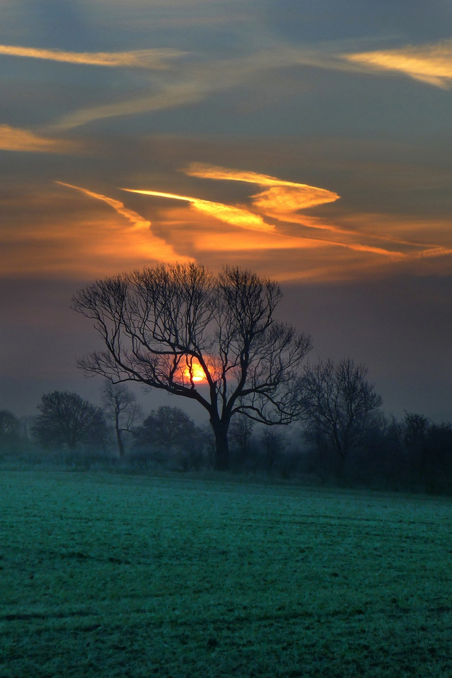 sunset tree grass clouds