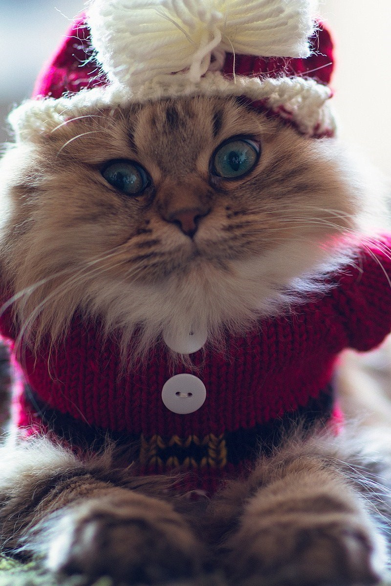 christmas costume for cats santa hat