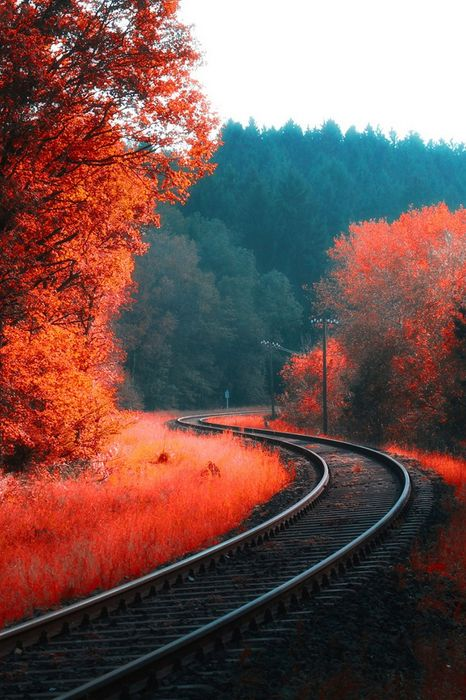 orange autumn railway forest