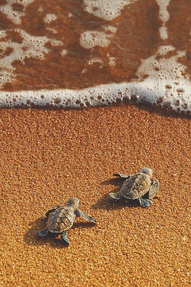 sea turtles sand