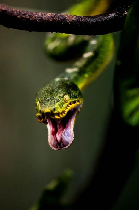 green snake attack