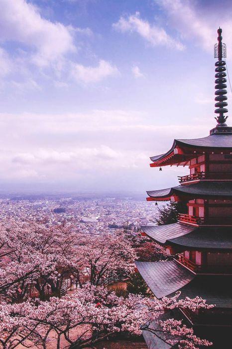 japan sakura pink house