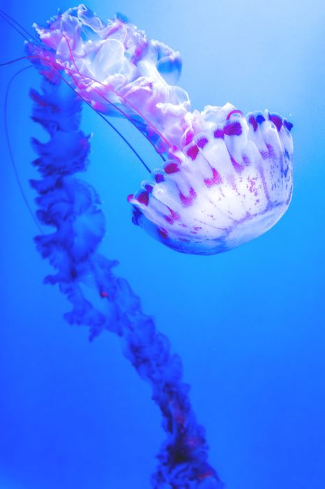 violet jellyfish ocean deep wallpaper 1280x1920