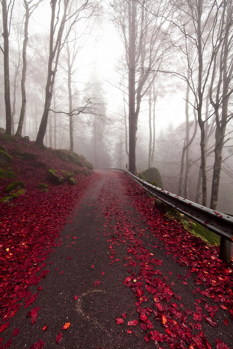 road crimson leaves forest trees