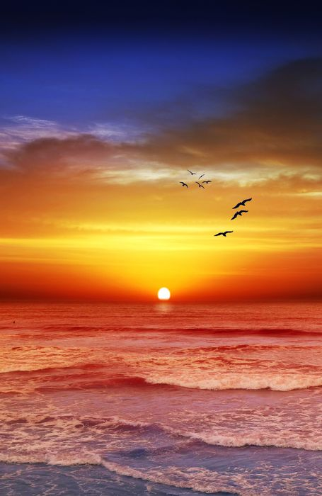 sunset sun beach sky sunrise ocean burds water landscape