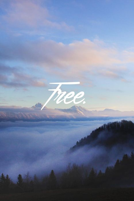 free fog forest quote