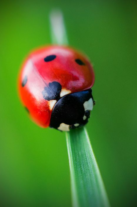 ladybug grass green macro wallpaper