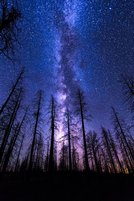 night sky start forest milkyway violet 1280x1920