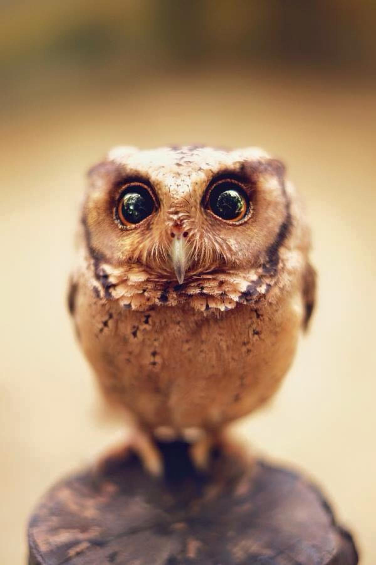 owl bird animal cartoon eye wildlife art beak wild design