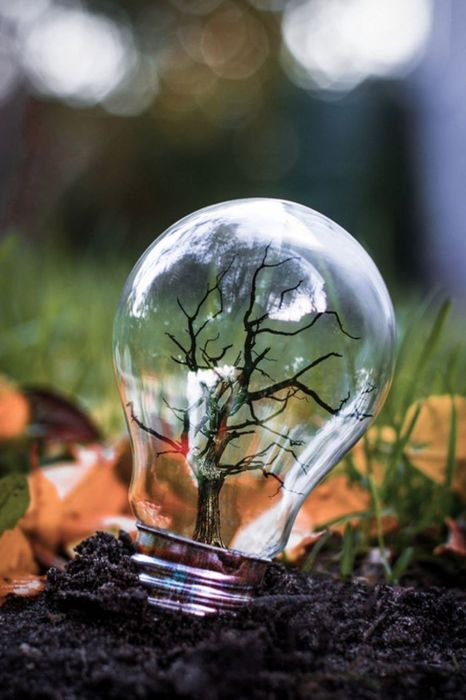 light bulb with tree inside metal grass forest macro