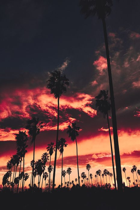 red sunset palms sky clouds night wallpaper