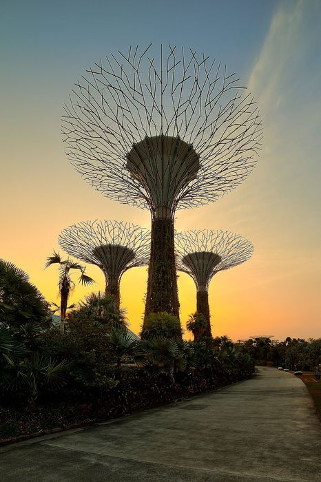 singapore landscape tree grass summer sunset garden
