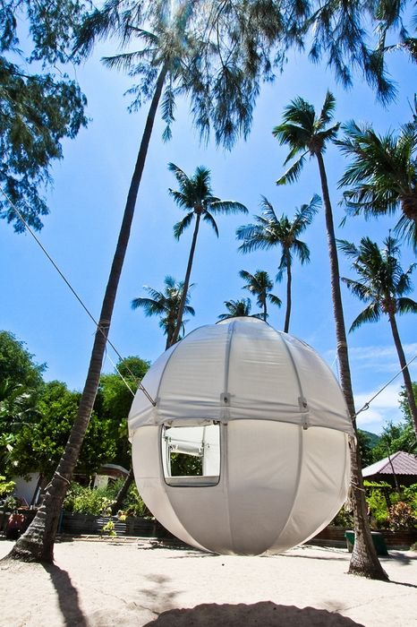 cocoon tree tent palm