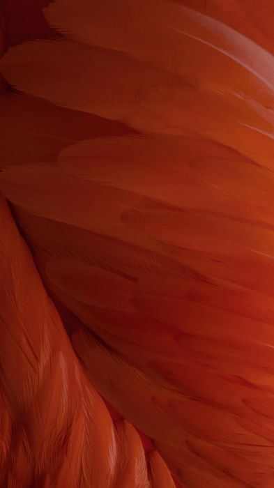 feather orange mcro photo background