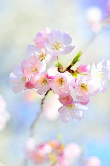 flower macro orchid pink blossom bloom petal plant floral bouquet