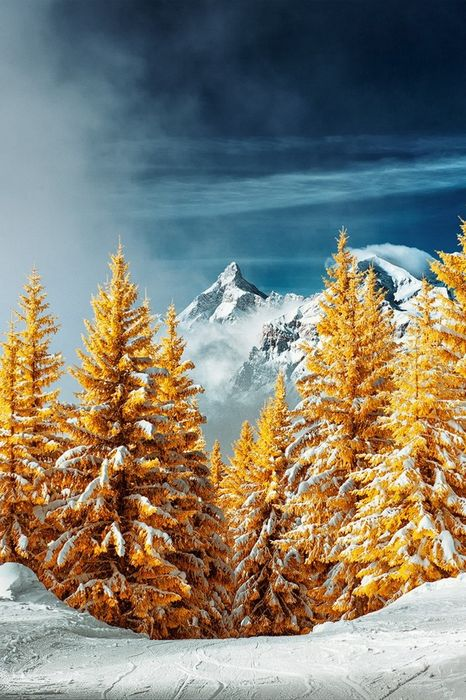 winter yellow christmastree snow mountain
