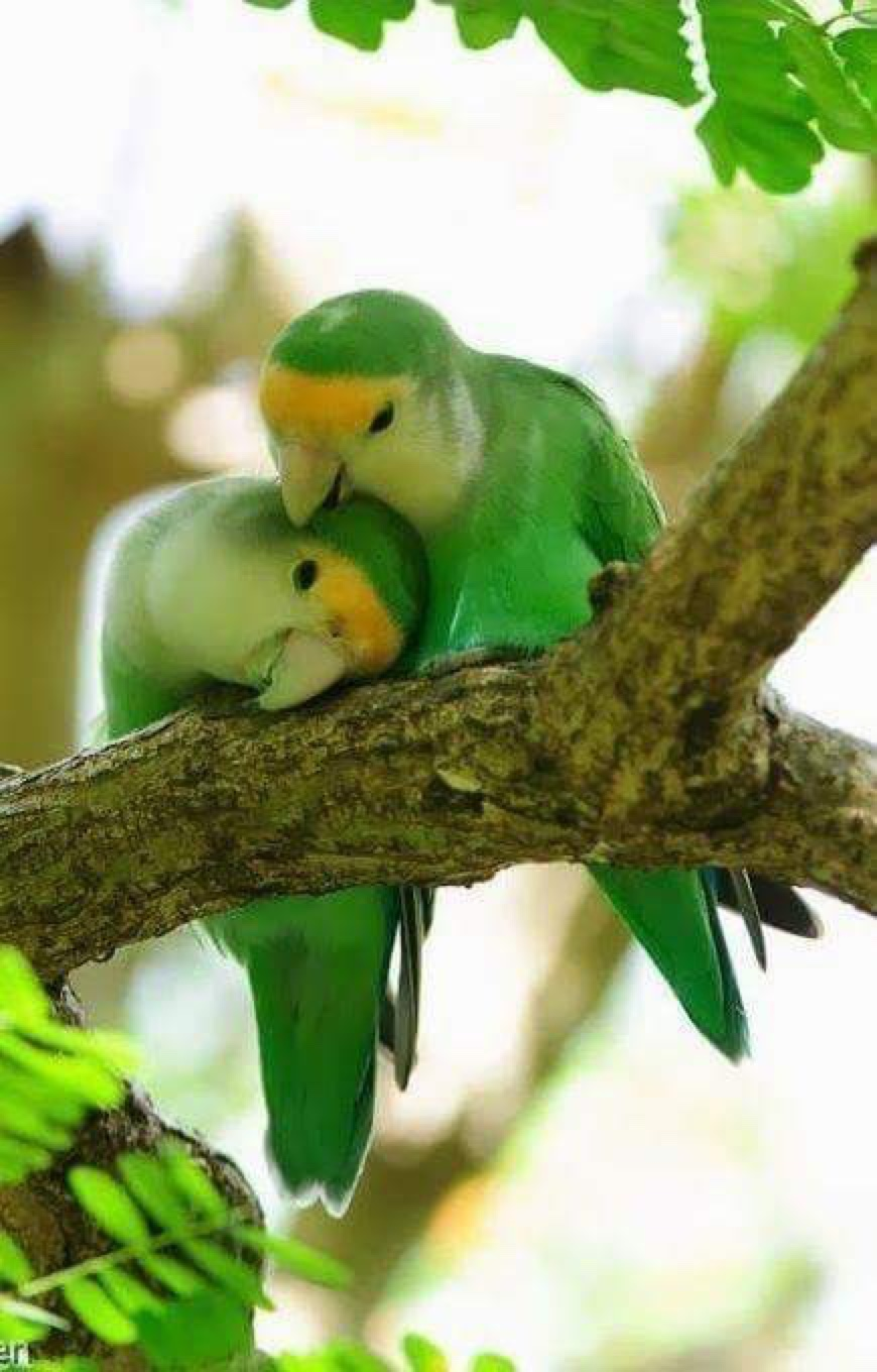 birds green tree animal american wildlife