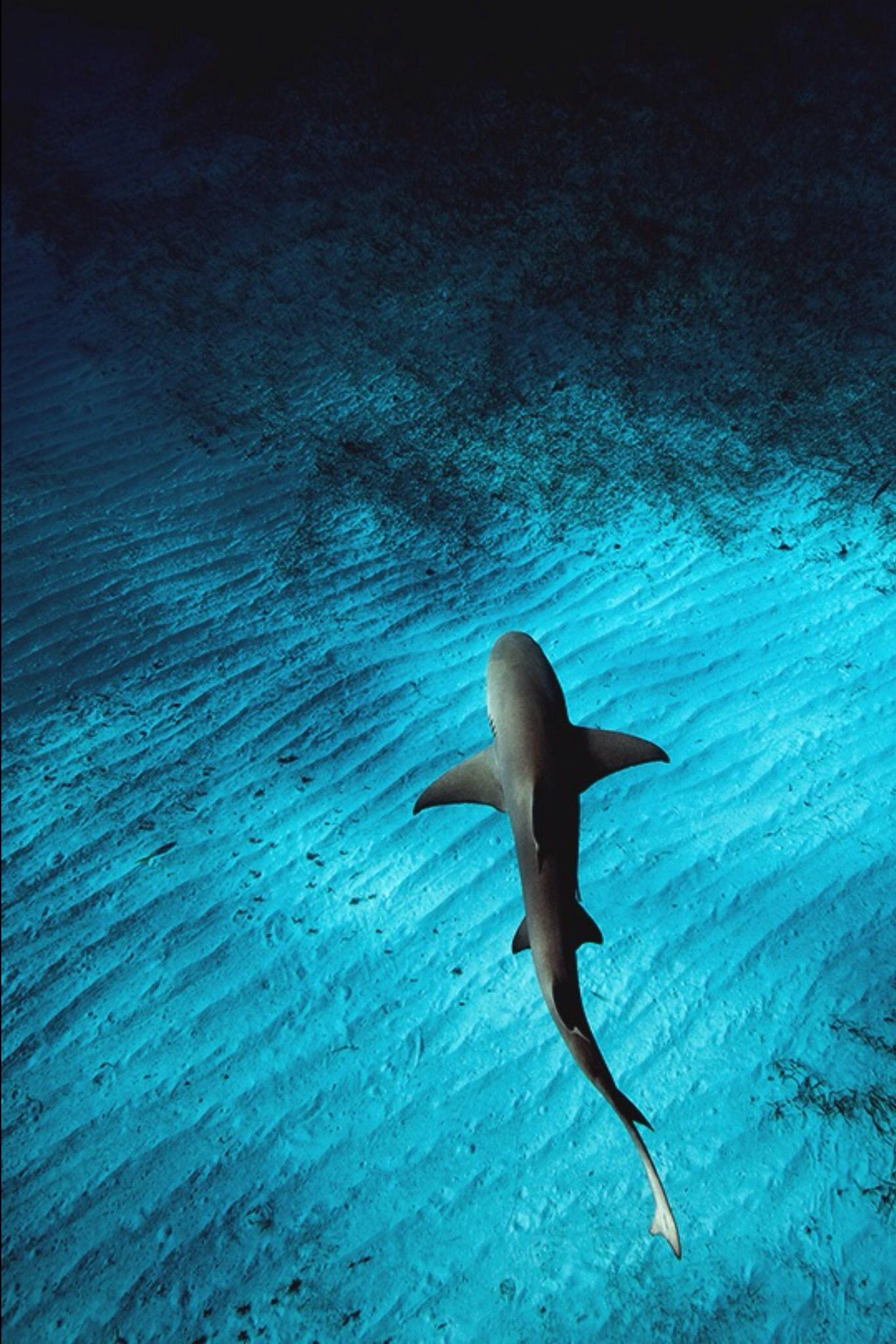 blue dive hammerhead water shark sea beach summer ocean