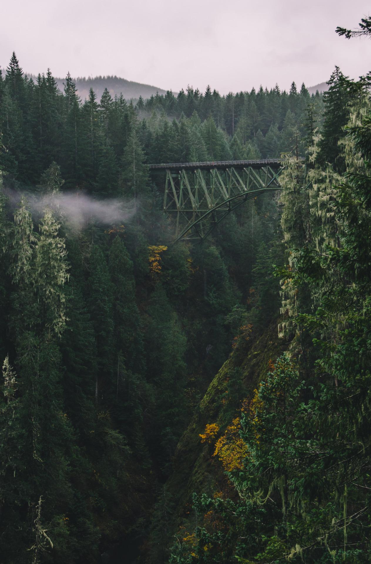 forest landscape valley river water mountain wilderness stream bridge tree