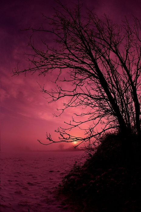 crimson sunset tree water