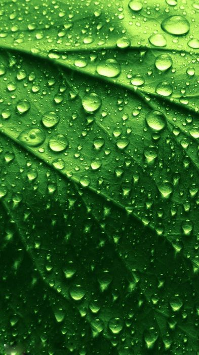 drop leaf rain dew water plant spring environment wet drops