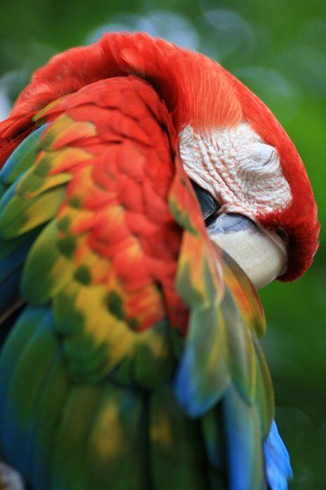 parrot ara 750x1334