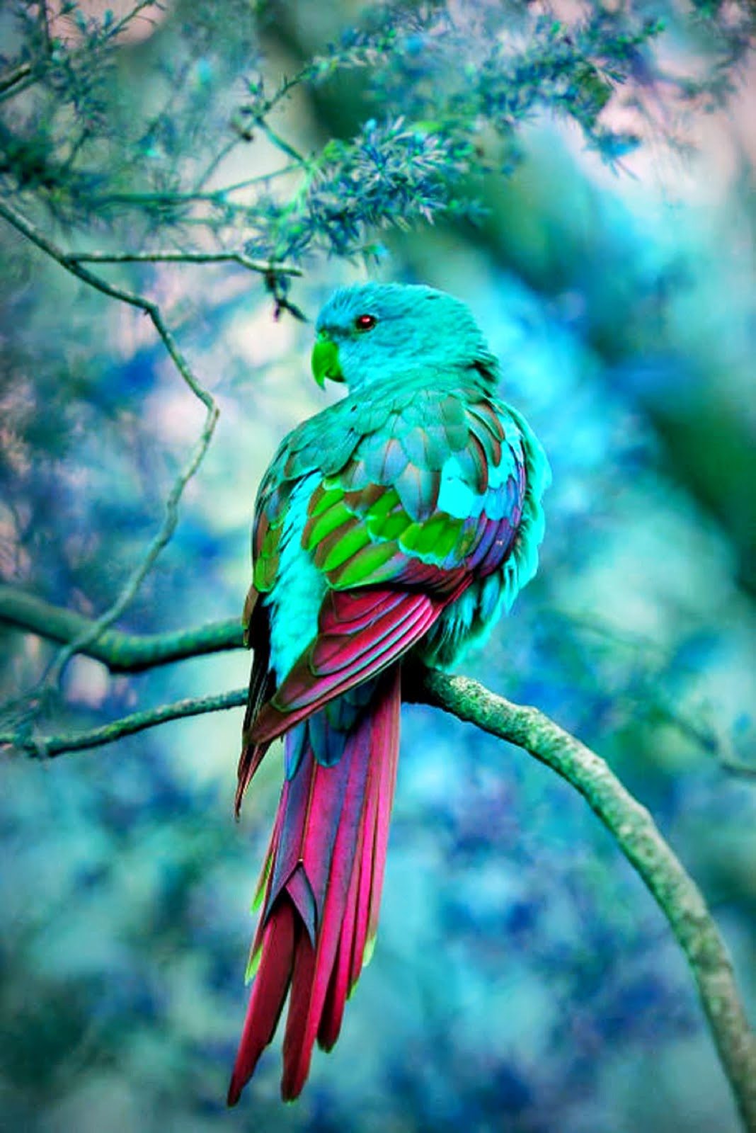 bird indigo bunting bird parrot animal forest