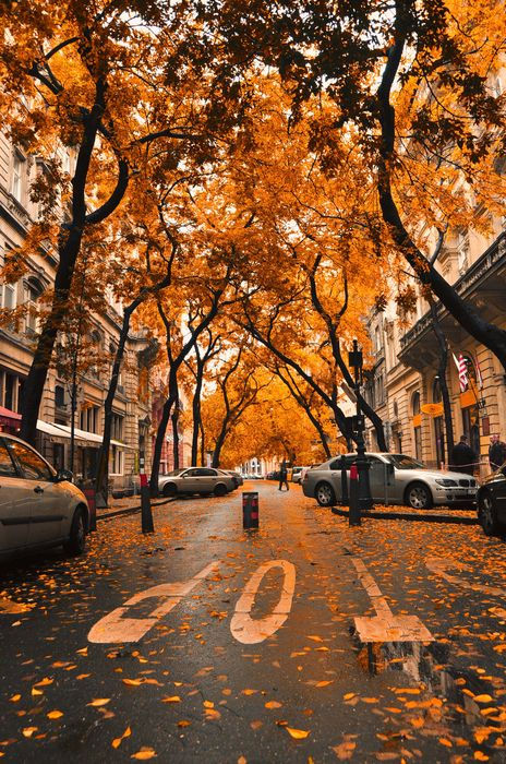 orange autumn leaves alley landscape tree park forest street fall city