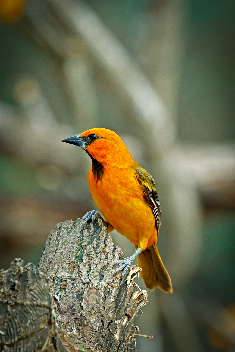 yellow bird wing animal goldfinch finch black orange color animal