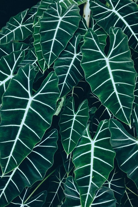 leaf nature flora desktop abstract growth pattern bright design garden illustration