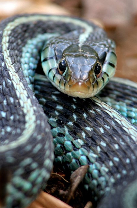 snake reptile wildlife viper toxicant animal nature python cobra venom danger