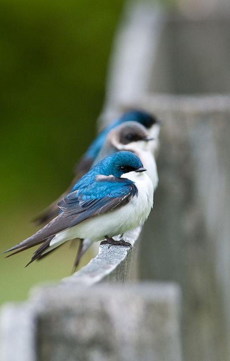 bird tiny blue aminal macro summer fly