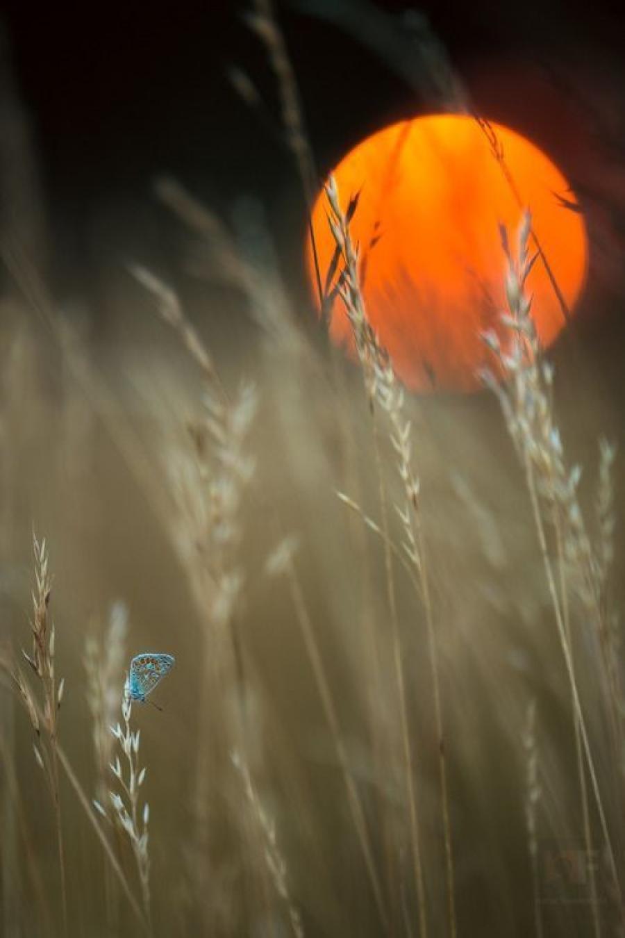 outdoors nature blur summer wheat light fall bright flower water grass
