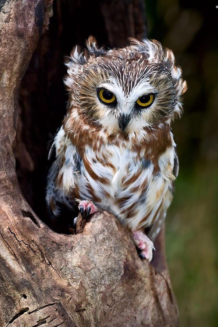 owl wildlife bird animal nature zoo wild prey beak hunter feather